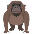 brown orangutan with happy face vector image