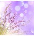 Lavender Flower vector image