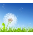 White Dandelion vector image vector image