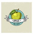 apple vintage hand drawn fresh fruits background vector image