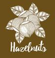 Hazelnut with leaves background vector image