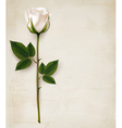 Happy Mothers Day background Single white rose on vector image vector image