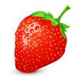 Ripe strawberry vector