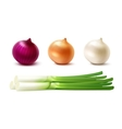 Set of Whole Yellow Red White Green Onion Bulbs vector image