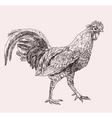 Hand drawn cock vector image