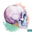 Nice skull vector image