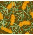 seamless orange sea-buckthorn vector image