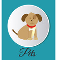 pets design vector image