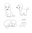 Set of cute poodle in different poses vector image