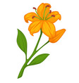 flower lily blossom bud or bloom flat vector image vector image