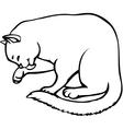 kitten carefully washes vector image