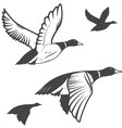 wild duck vector image
