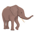 elephant isolated vector image