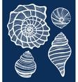 hand-drawn shell set vector image