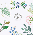 Herbal background for the organic medicine vector image