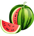 Sliced ripe watermelon isolated on white vector image