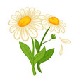 flower daisy blossom bud or bloom flat vector image vector image