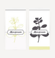 marjoram in outline and silhouette style vector image