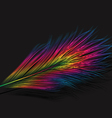Isolated feather vector image