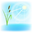 Cane lake and sun with lens flare EPS10 vector image vector image