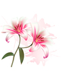 Flower Background With Two Beautiful Lilies vector image