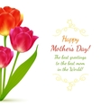 Buquet of tulips for Mothers Day vector image vector image