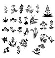 flowers set collection vector image