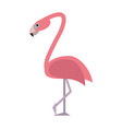 exotic animal swan vector image