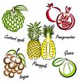 thai fruit vector image