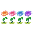 Six colorful flowering plants vector image