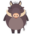 wild pig on white background vector image