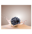 blackberry and milk vector image