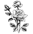 Hand-drawn of rose flowers bouquet vector image