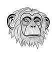 Monkey chimpanzee ape head animal vector image