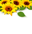 Sunflowers Background With Sunflower And Leaves vector image vector image