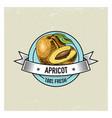 apricot vintage hand drawn fresh fruits vector image
