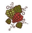 grape vine vintage wine production or vector image