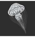 Sea or ocean stripping medusa blubber vector image
