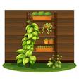 gardening scene with flowerpots on shelves vector image