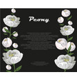 white peony template on black background vector image