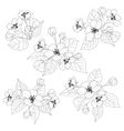 Apple tree flowers and leaves set contours vector image