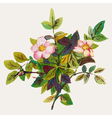 Dog rose vector image