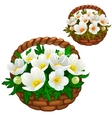 Beautiful bouquet of white flowers in straw basket vector image