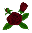 bouquet red roses decorative floral design element vector image vector image