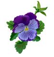 Violet pansy flower with leaves and bud vector image