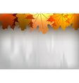 background autumn big top leaves red gray vector image