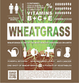 wheatgrass info graphic vector image vector image