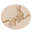 wild turkey perching on branch vector image vector image