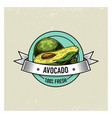 avocado vintage hand drawn fresh fruits vector image