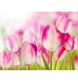 Pink tulip with bokeh EPS 10 vector image vector image